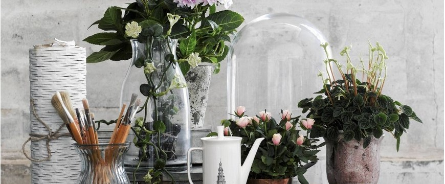 Одиночные цветы и головки